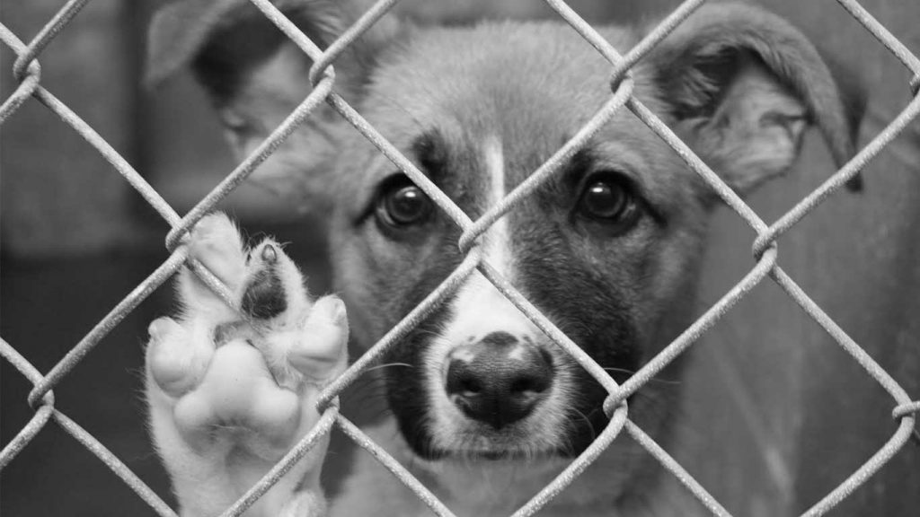asielhonden-eurodogs